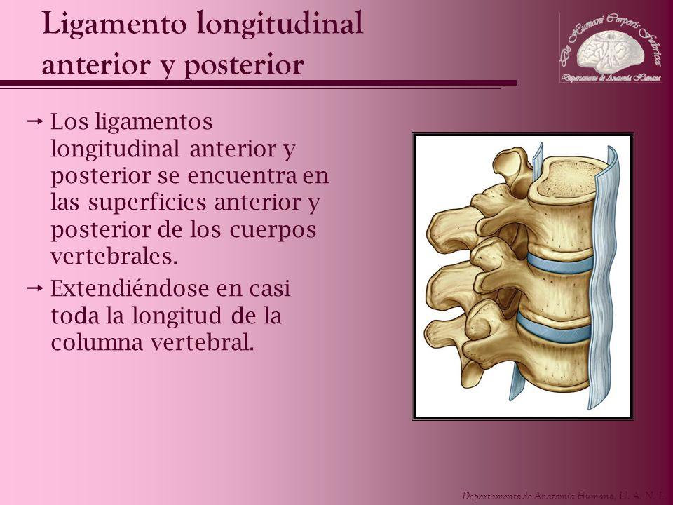 Ligamento longitudinal anterior y posterior