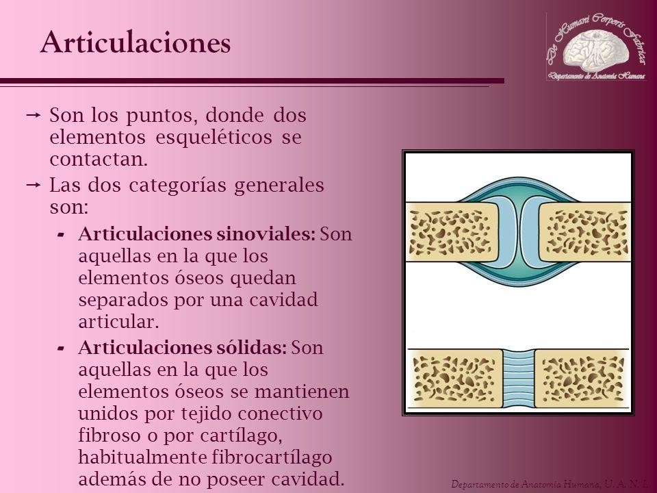 Articulaciones Son los puntos, donde dos elementos esqueléticos se contactan. Las dos categorías generales son: