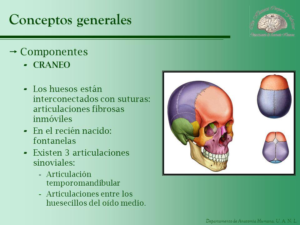 Conceptos generales Componentes CRANEO