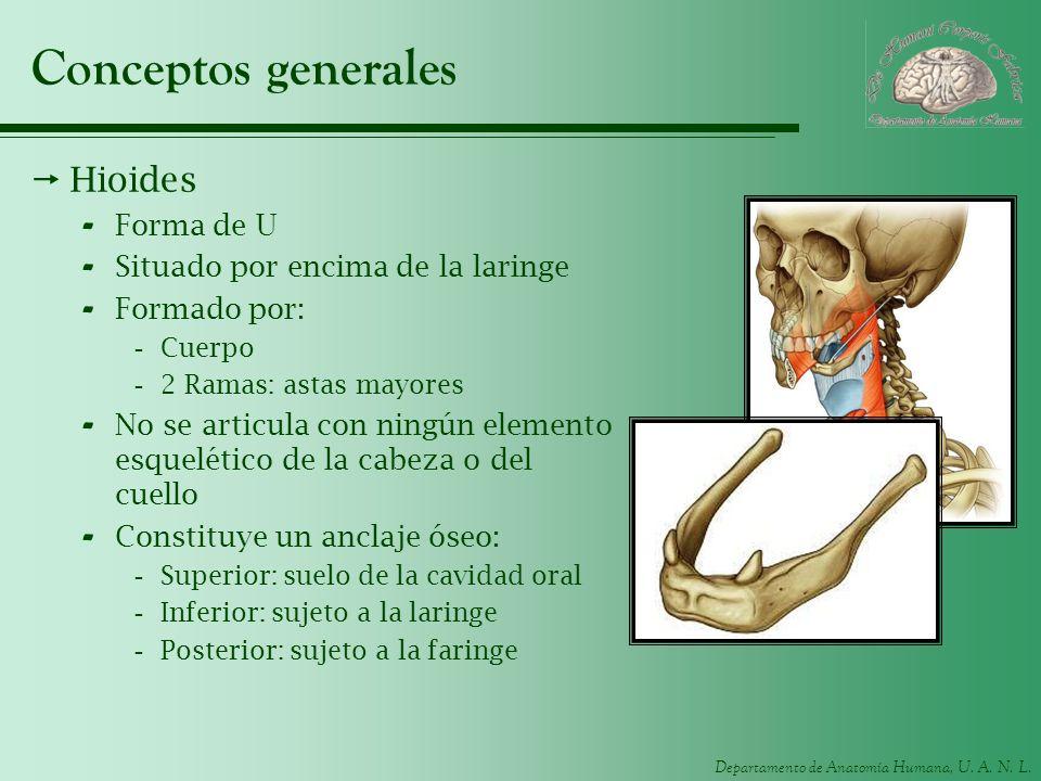 Conceptos generales Hioides Forma de U