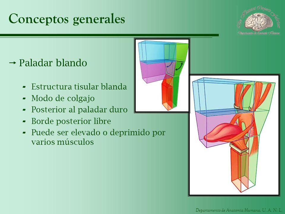 Hermosa Es La Anatomía Humana Duro Imagen - Anatomía de Las ...