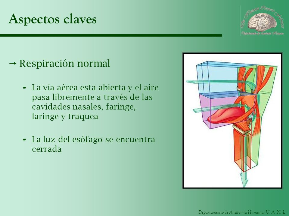 Aspectos claves Respiración normal