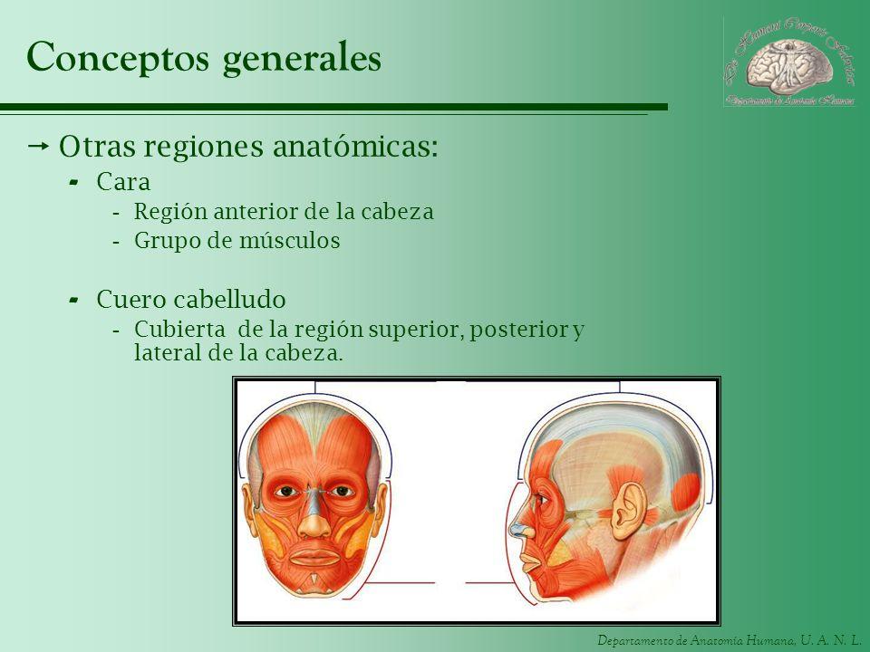 Conceptos generales Otras regiones anatómicas: Cara Cuero cabelludo