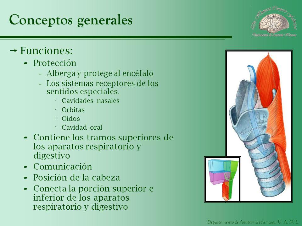 Conceptos generales Funciones: Protección