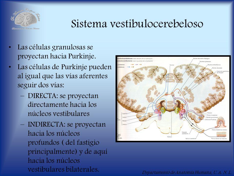 Sistema vestibulocerebeloso