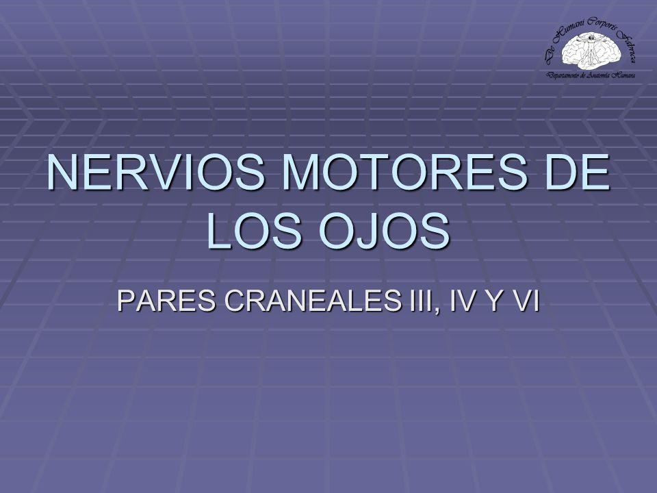 NERVIOS MOTORES DE LOS OJOS