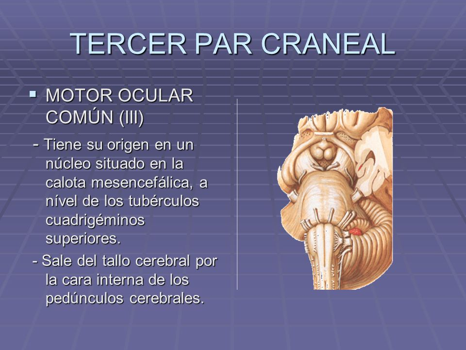 TERCER PAR CRANEAL MOTOR OCULAR COMÚN (III)