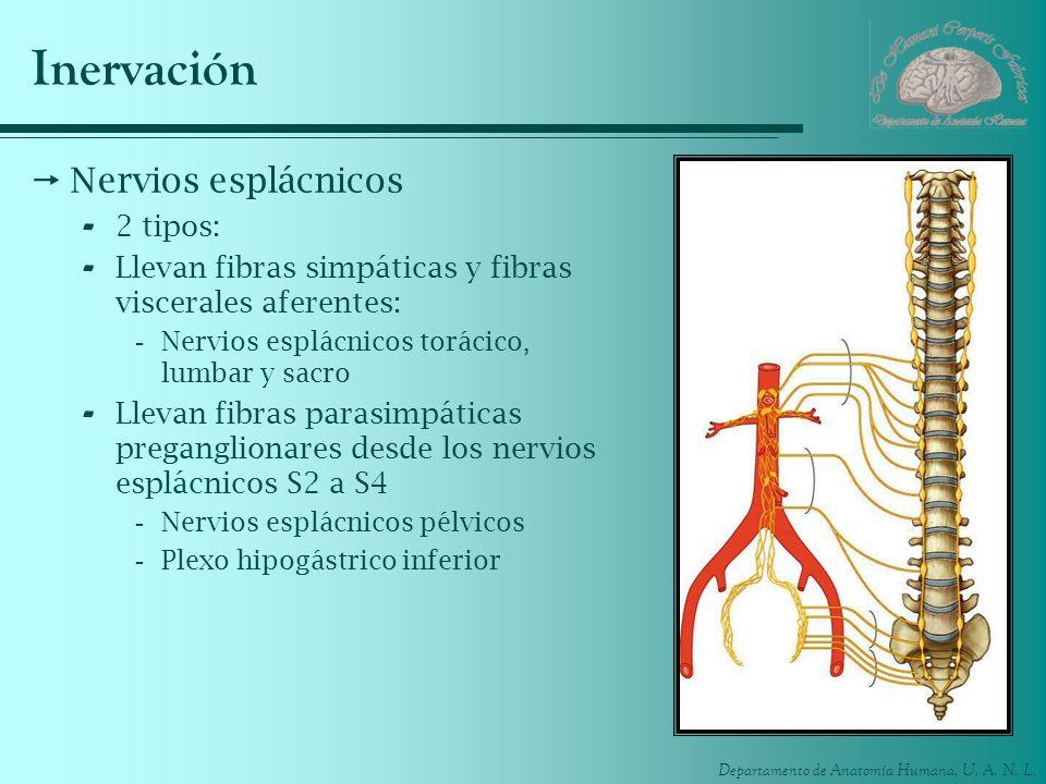 Inervación Nervios esplácnicos 2 tipos: