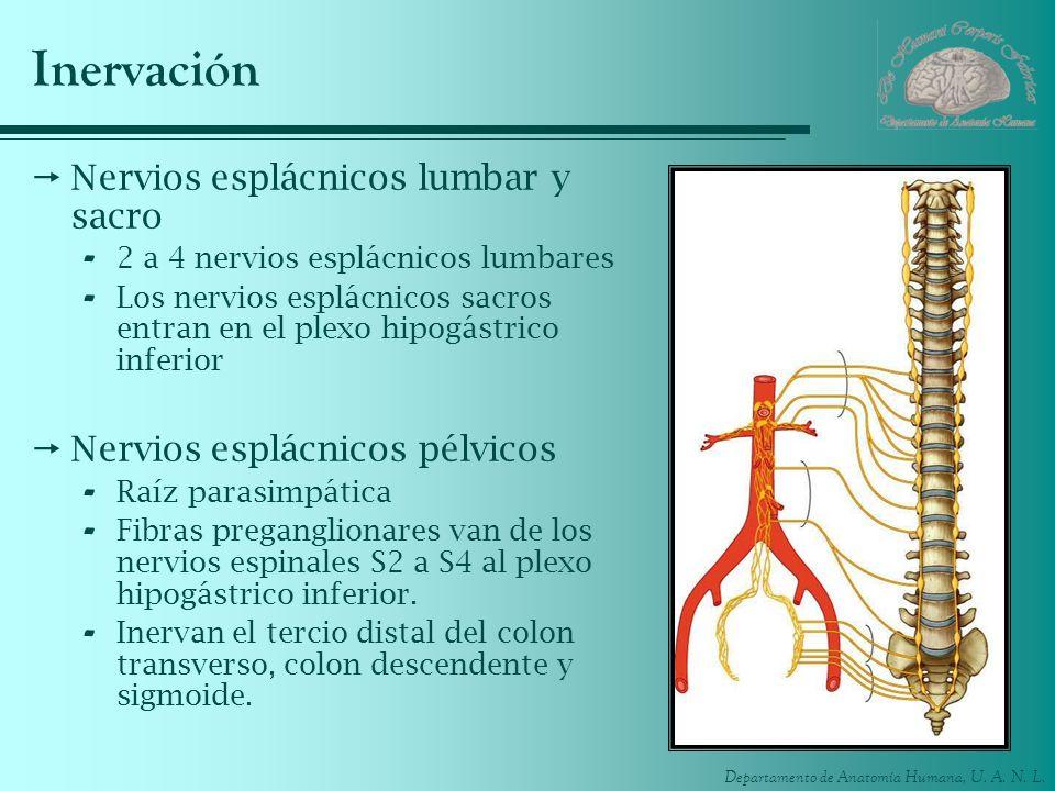 Inervación Nervios esplácnicos lumbar y sacro