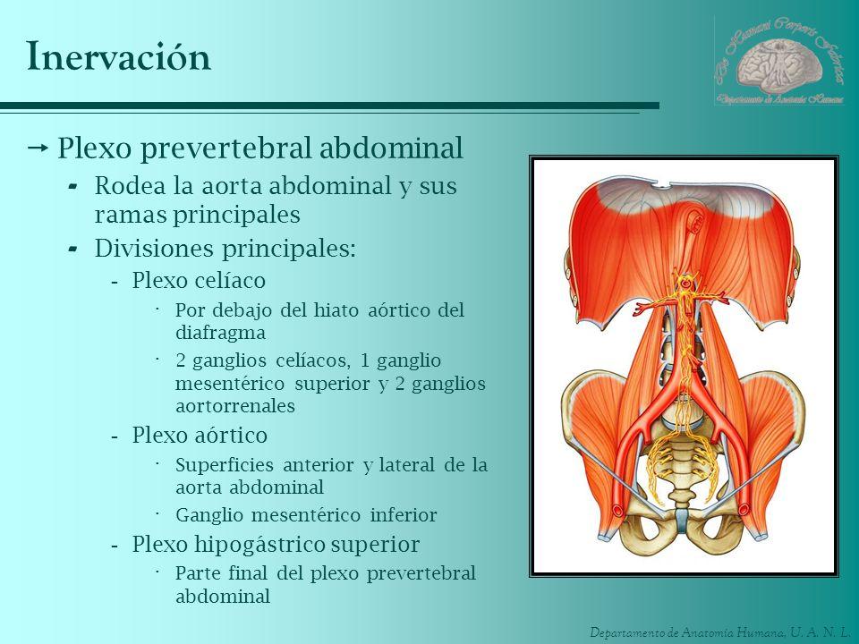 Inervación Plexo prevertebral abdominal