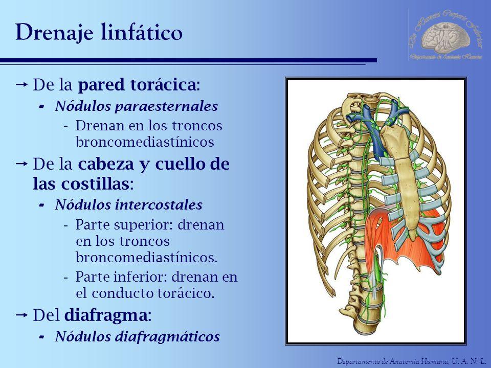 Drenaje linfático De la pared torácica: