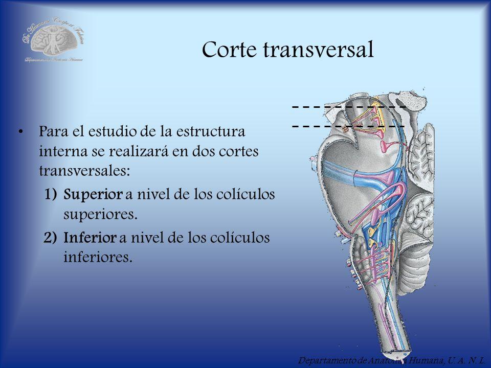 Corte transversal Para el estudio de la estructura interna se realizará en dos cortes transversales: