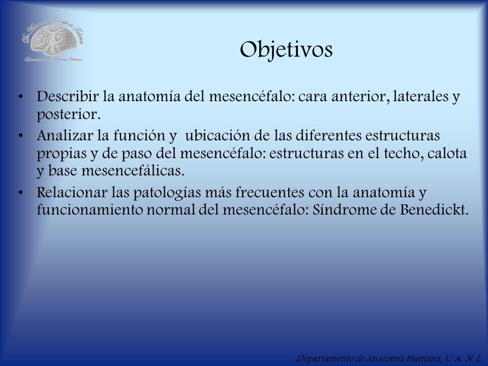 Objetivos Describir la anatomía del mesencéfalo: cara anterior, laterales y posterior.