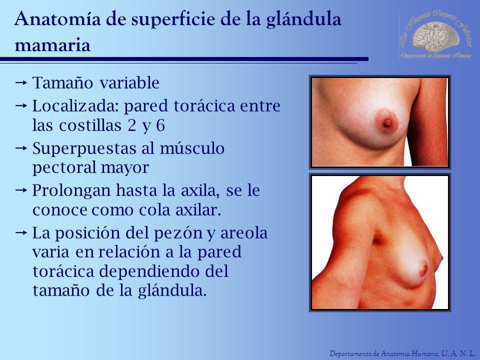 Anatomía de superficie de la glándula mamaria