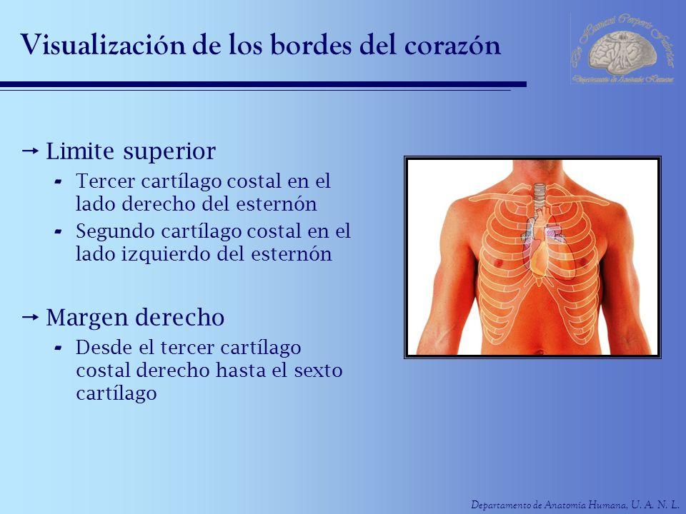 Visualización de los bordes del corazón