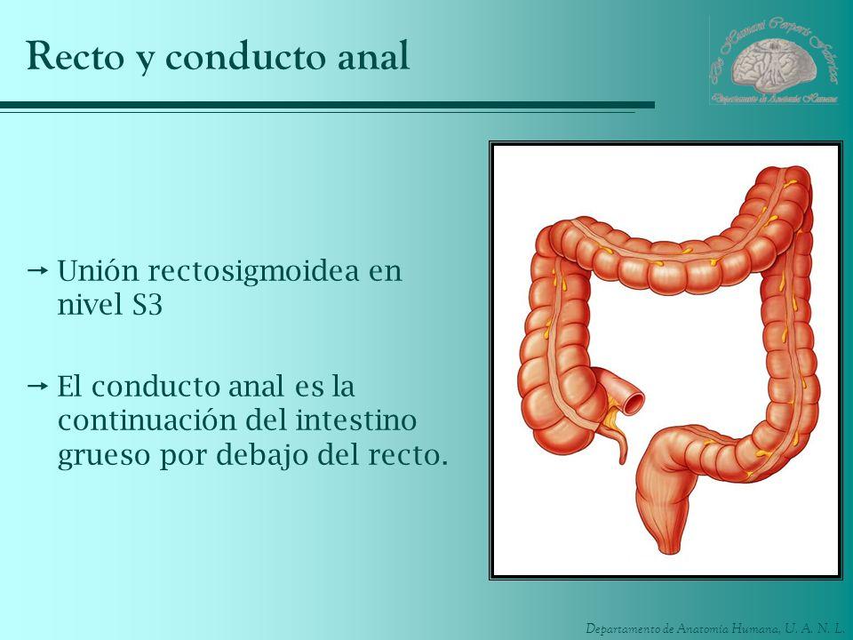 Recto y conducto anal Unión rectosigmoidea en nivel S3