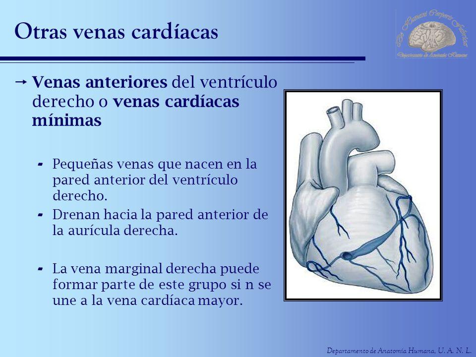 Otras venas cardíacas Venas anteriores del ventrículo derecho o venas cardíacas mínimas.