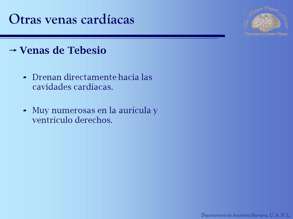 Otras venas cardíacas Venas de Tebesio