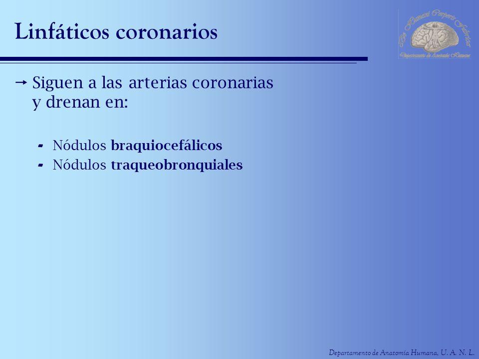 Linfáticos coronarios
