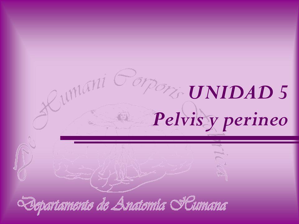 UNIDAD 5 Pelvis y perineo