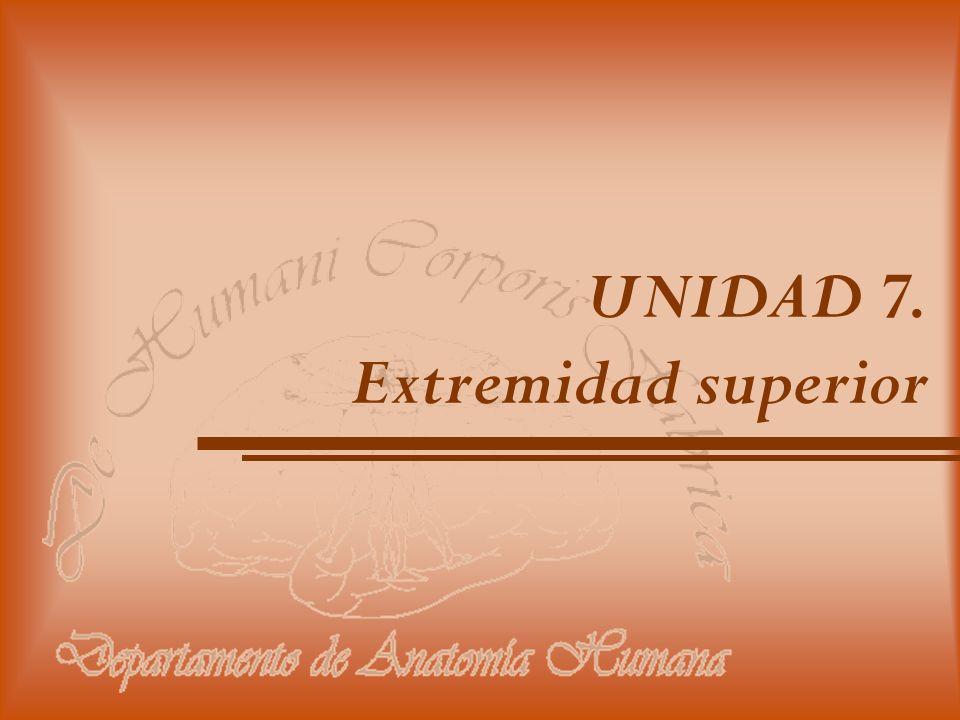 UNIDAD 7. Extremidad superior