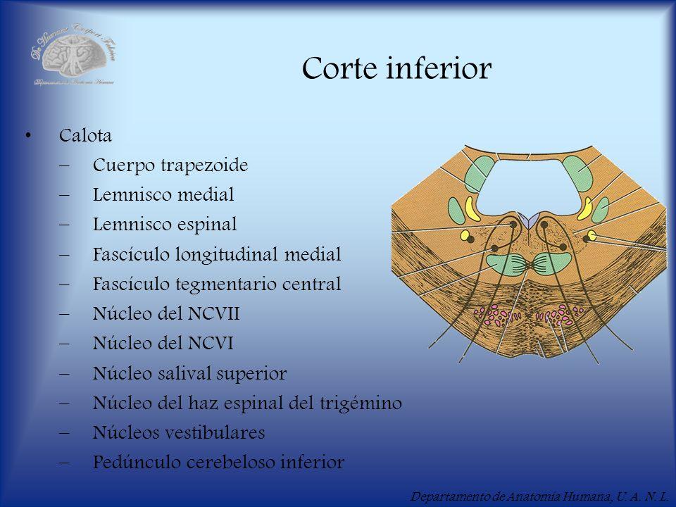 Corte inferior Calota Cuerpo trapezoide Lemnisco medial