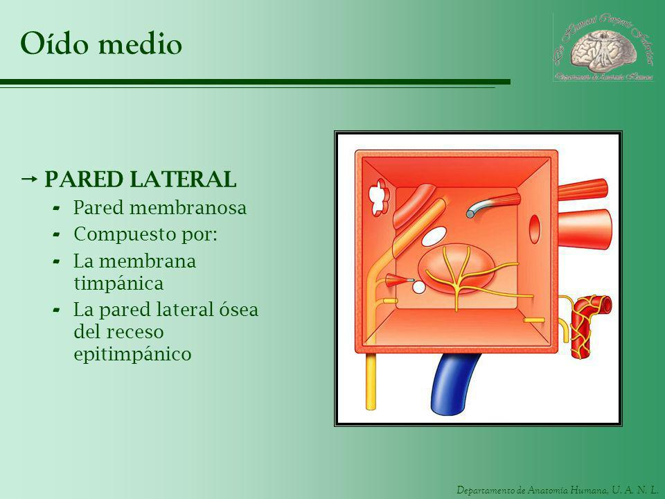Oído medio PARED LATERAL Pared membranosa Compuesto por: