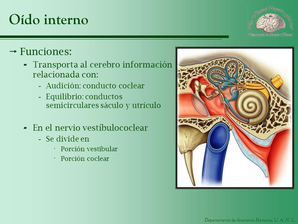Oído interno Funciones: