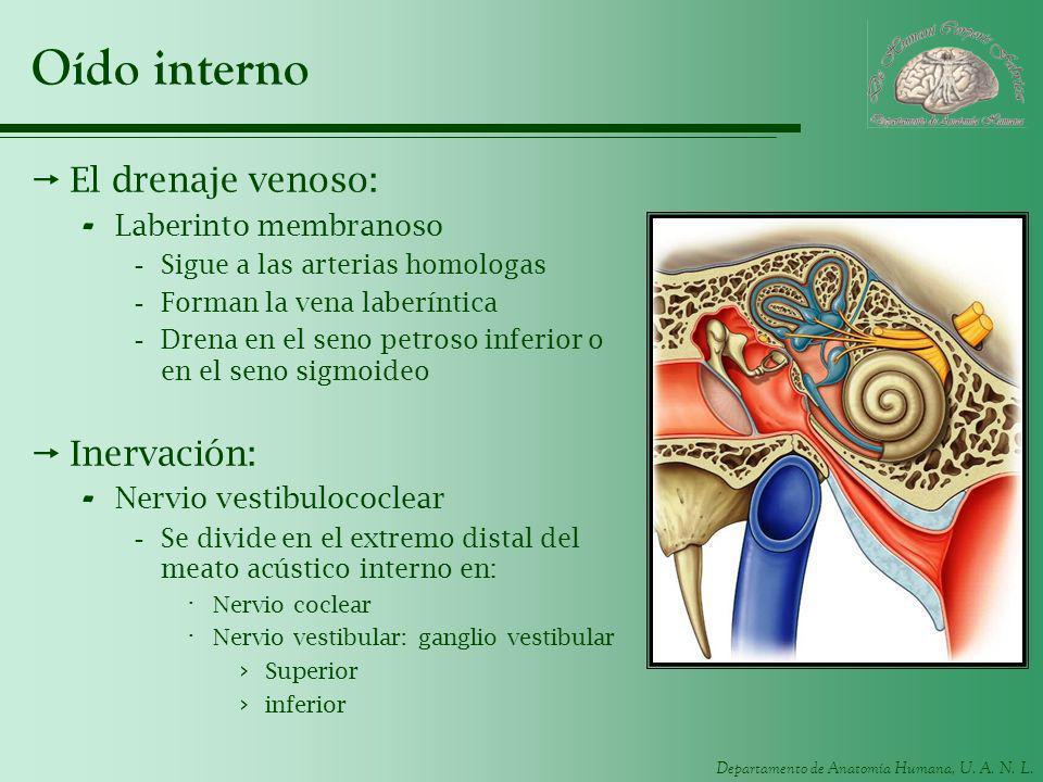 Oído interno El drenaje venoso: Inervación: Laberinto membranoso