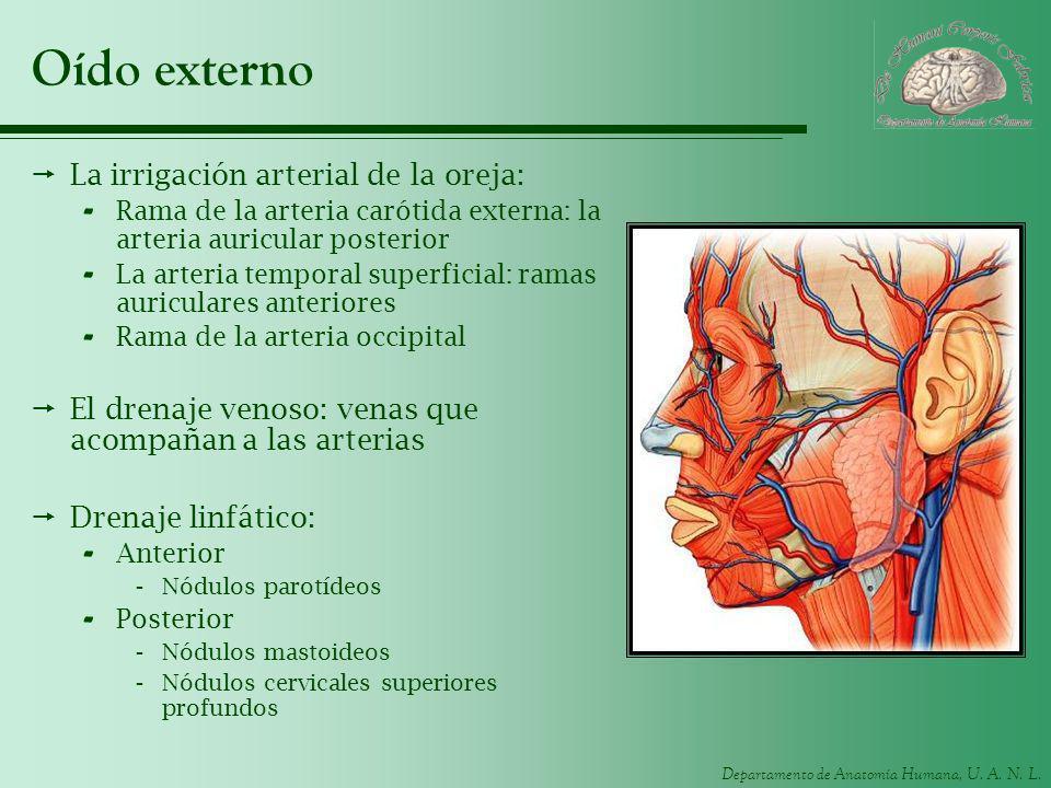 Oído externo La irrigación arterial de la oreja: