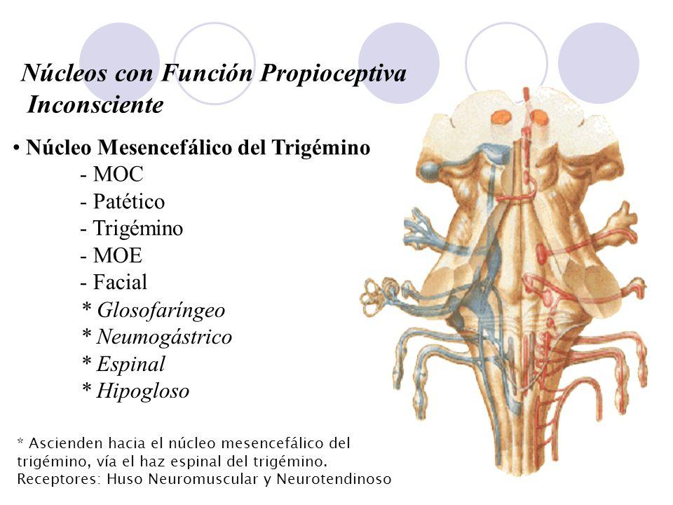 Núcleos con Función Propioceptiva Inconsciente