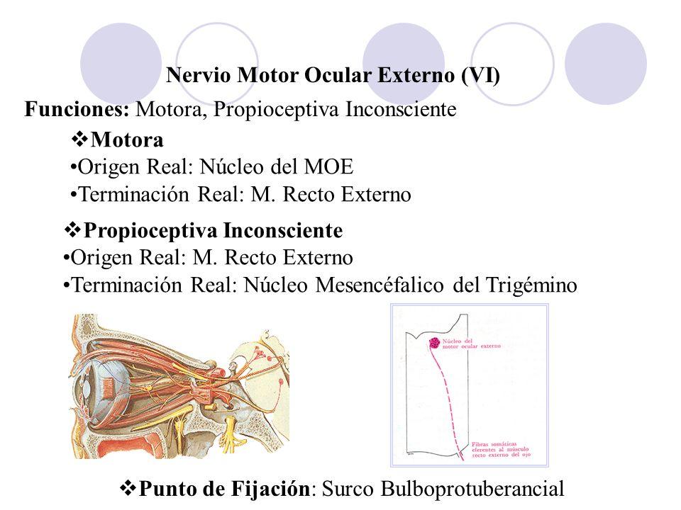 Nervio Motor Ocular Externo (VI)