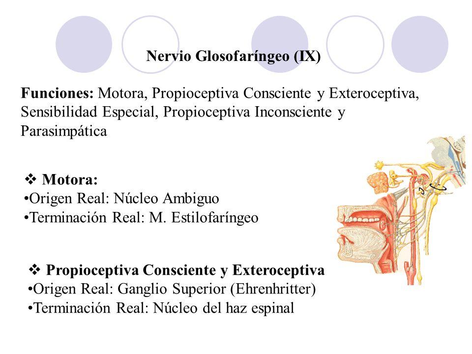Nervio Glosofaríngeo (IX)