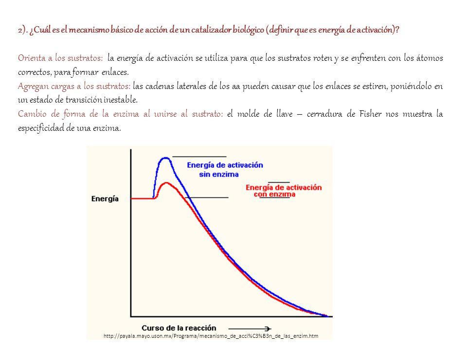 2). ¿Cuál es el mecanismo básico de acción de un catalizador biológico (definir que es energía de activación)