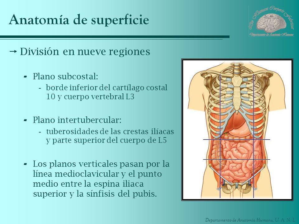 Anatomía de superficie