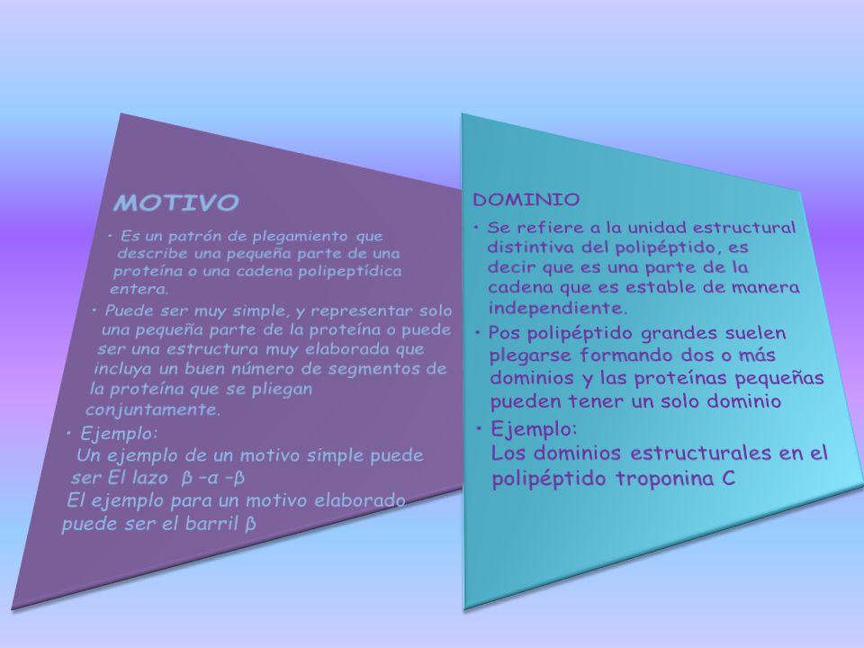 MOTIVO Es un patrón de plegamiento que describe una pequeña parte de una proteína o una cadena polipeptídica entera.