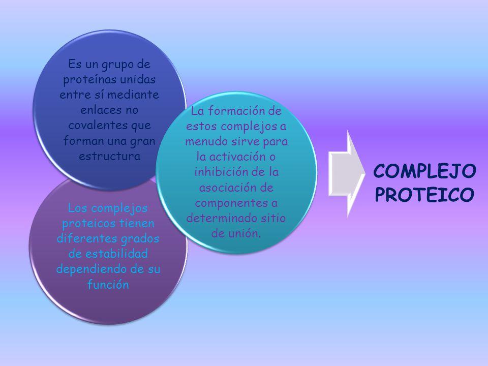 COMPLEJO PROTEICO Los complejos proteicos tienen diferentes grados de estabilidad dependiendo de su función.