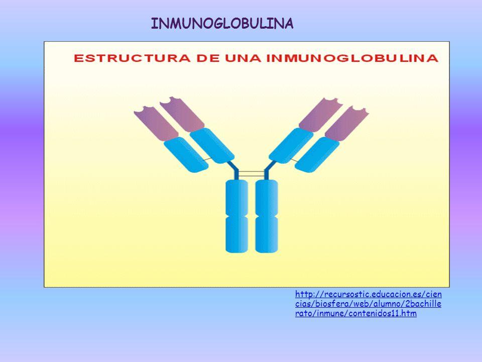 INMUNOGLOBULINA http://recursostic.educacion.es/ciencias/biosfera/web/alumno/2bachillerato/inmune/contenidos11.htm.