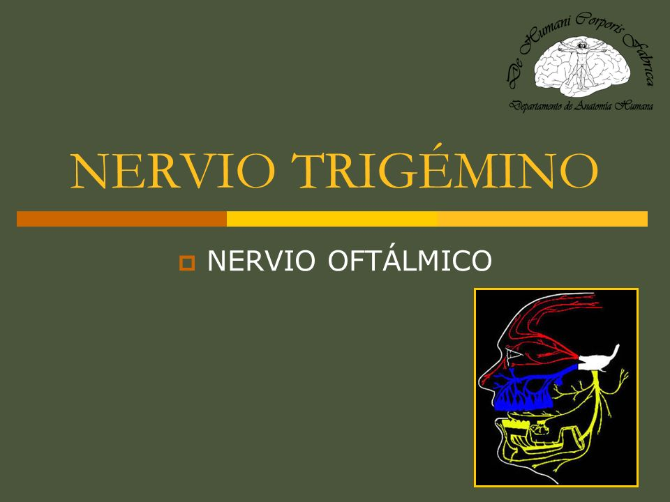 NERVIO TRIGÉMINO NERVIO OFTÁLMICO