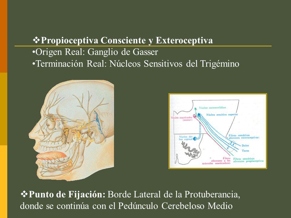 Propioceptiva Consciente y Exteroceptiva