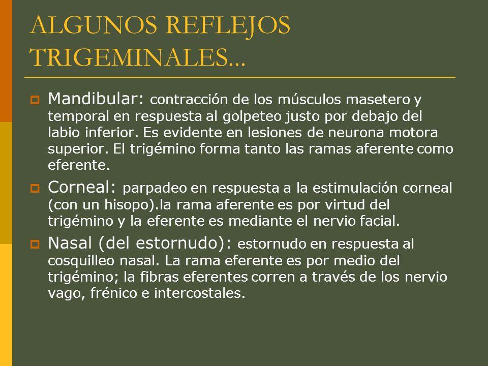 ALGUNOS REFLEJOS TRIGEMINALES...