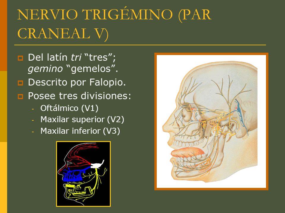 NERVIO TRIGÉMINO (PAR CRANEAL V)