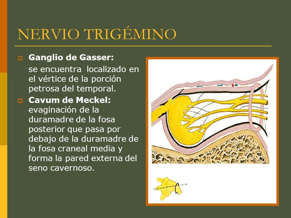 NERVIO TRIGÉMINO Ganglio de Gasser: