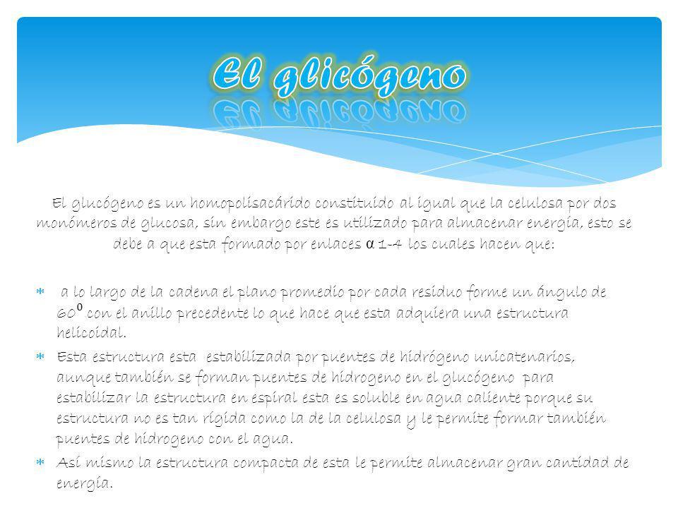 El glicógeno