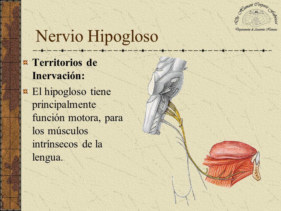 Nervio Hipogloso Territorios de Inervación: