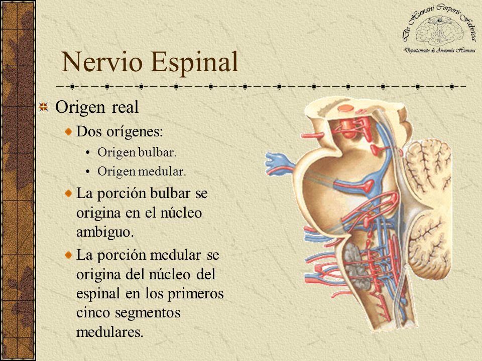 Nervio Espinal Origen real Dos orígenes: