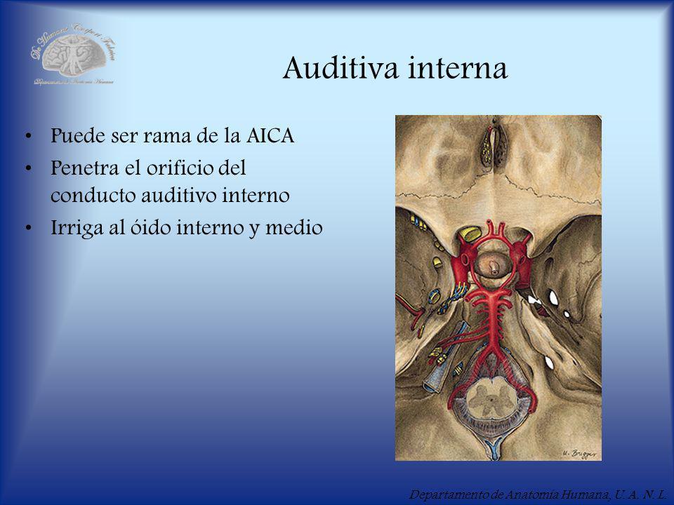 Auditiva interna Puede ser rama de la AICA