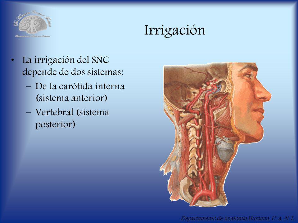 Irrigación La irrigación del SNC depende de dos sistemas: