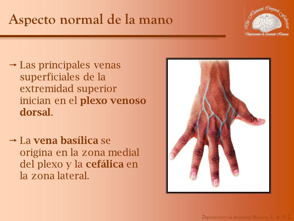 Aspecto normal de la mano