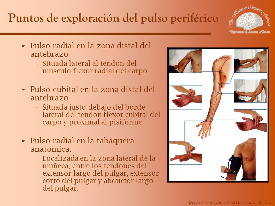 Puntos de exploración del pulso periférico